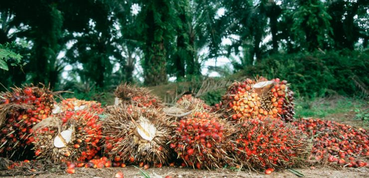 Nigeria Agriculture Sector – FY'18 Earnings Preview: Weak Crude Palm Oil prices will pressure FY'18 PAT