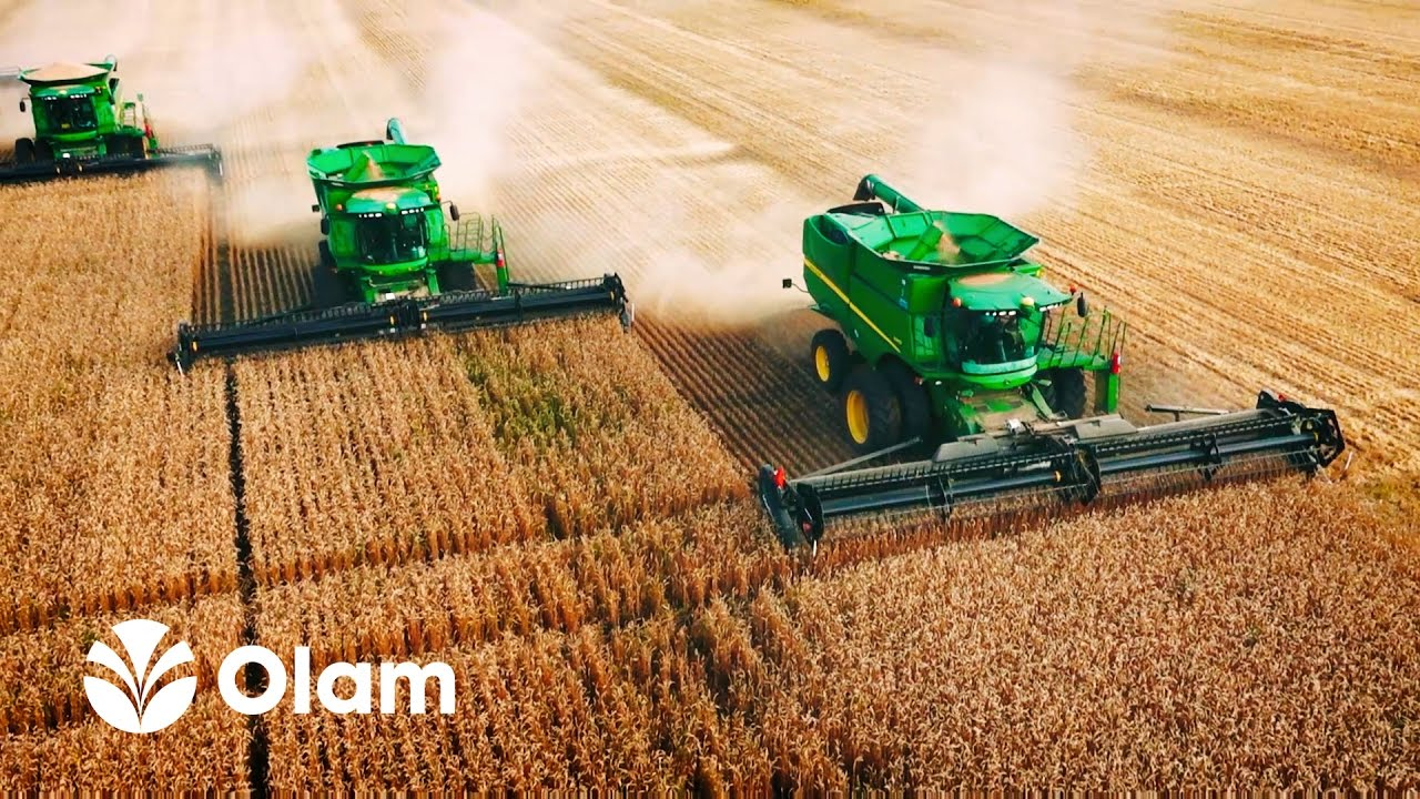 Olam reports resilient performance in H1 2020, with 44.4% growth in PATMI amid Covid-19