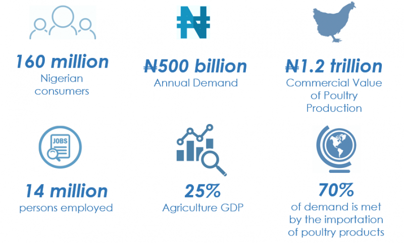 Interesting Facts About the Nigerian Poultry Industry