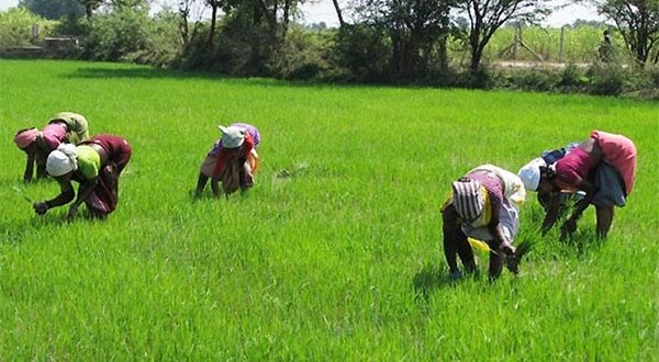 Nigeria's Agric Sector Requires N50 Billion Investment Over 5 Year Period For Food Security – NAQS Says - Brand Spur