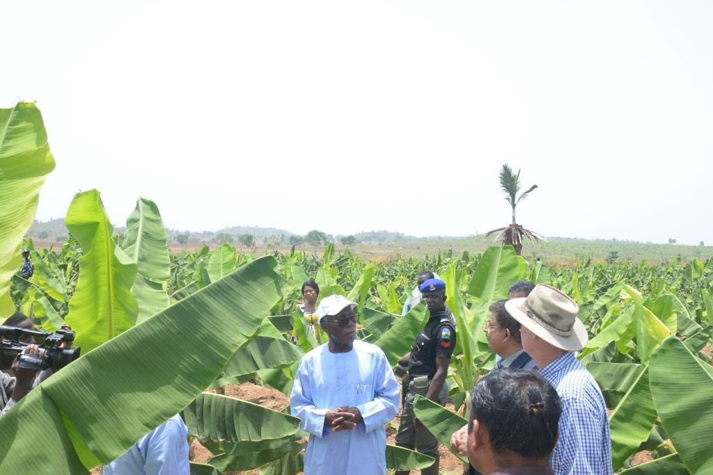 Ogbeh Visits Nigeria's first Organic Banana Plantation, Restates FG's Support To Private Sector Investments In Agriculture (Pictures)