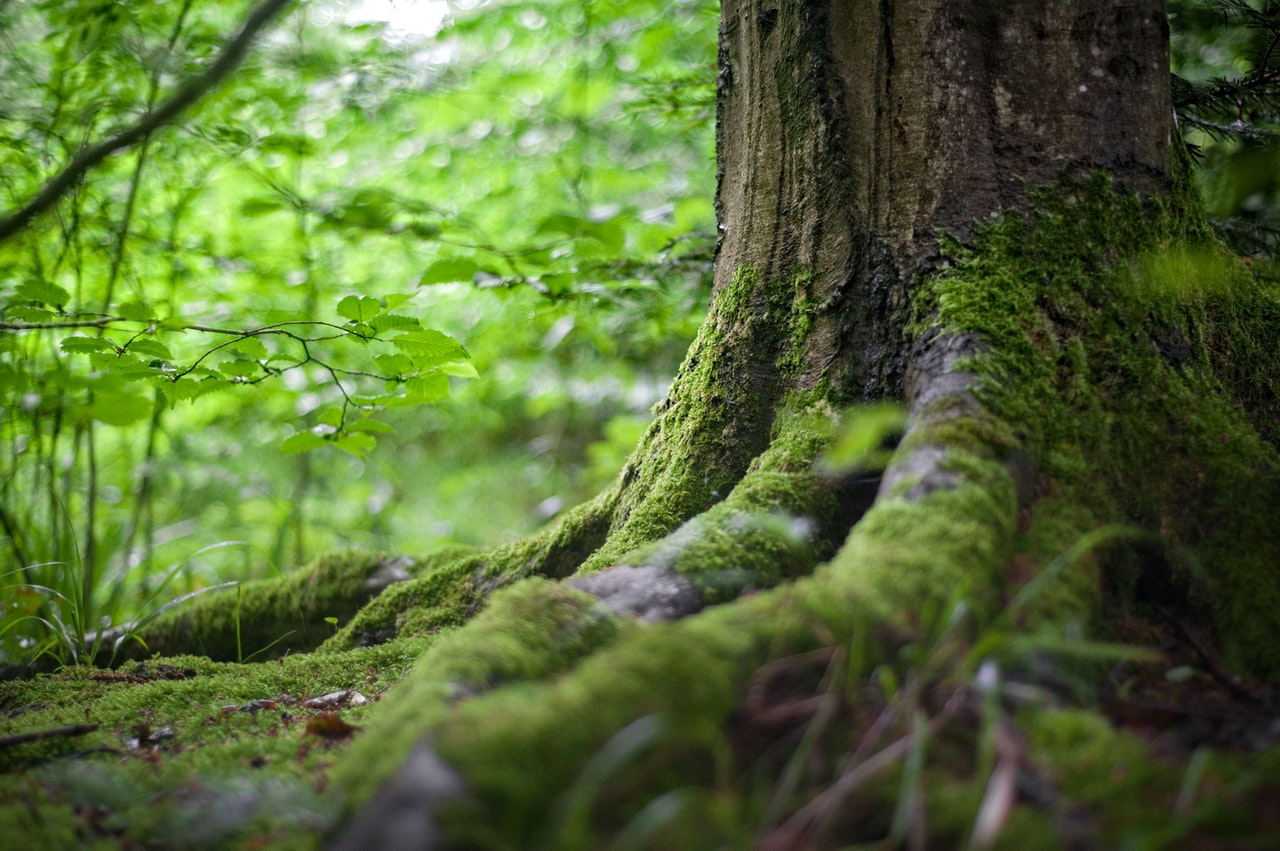 ODSG warns against illegal collection of funds in forest reserves
