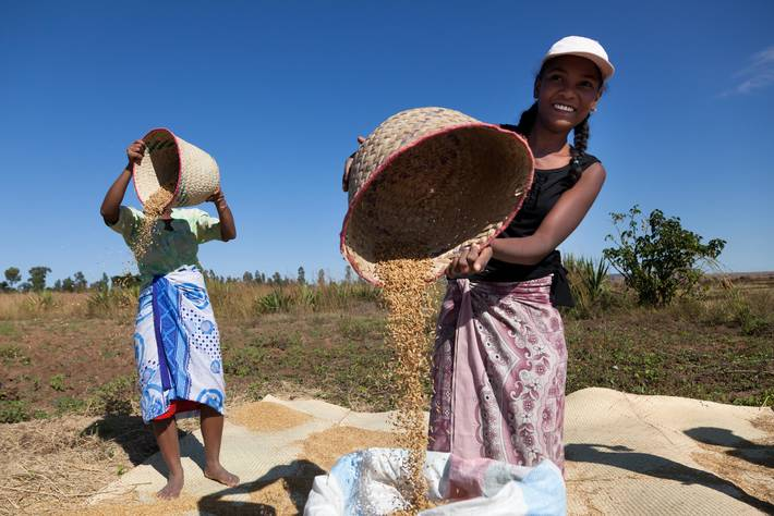 World food prices jump in November - FAO