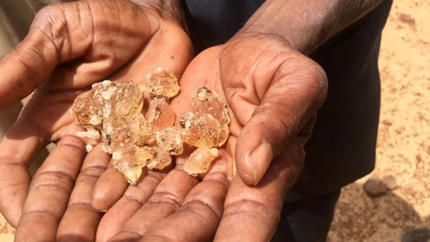 In Niger, a 'crazy idea' to restore degraded land pays off - Brand Spur