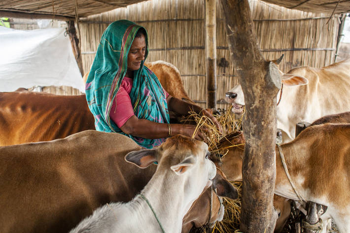 FAO's Committee on Agriculture focuses on how livestock Brandspurng sector transformation can contribute to achieving the SDGs