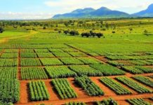 IITA and CIMMYT collaborate to enhance adoption of Conservation Agriculture in Southern Africa