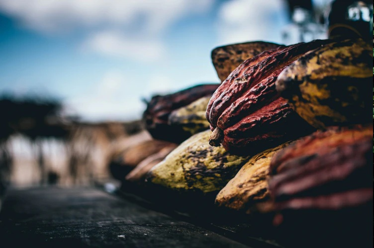 Olam Cocoa hits 100% traceability target across its direct global supply chain
