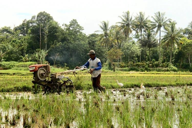 Nigeria's agricultural sector, stimulus-response, Fertiliser dealers