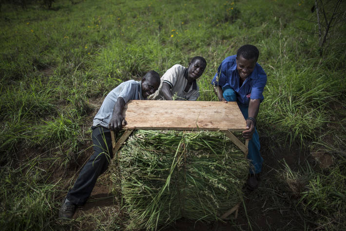 FAO's Statistical Yearbook offers largest trove of data on food and agriculture