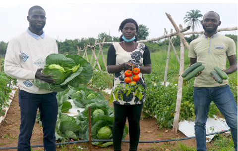 IITA BIP and partners host virtual Vegetable Field Day for farmers