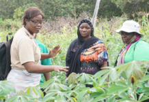 Rural female farmers contributing more to Cameroon's local economy—IITA-CARE study