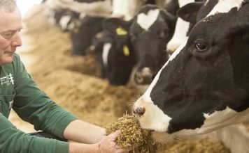 Nestlé joins US dairy industry to reach net zero carbon emissions by 2050