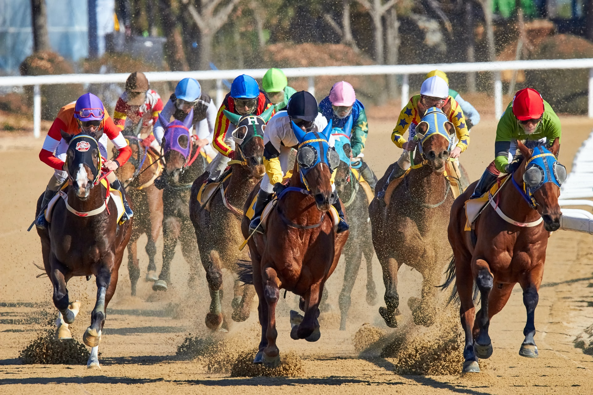 Horse Races on TonyBet: All you Need to Know