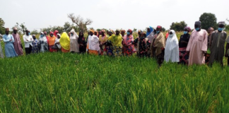 IITA conducts farmers' Green Field Day in Northeast Nigeria Brandspurng