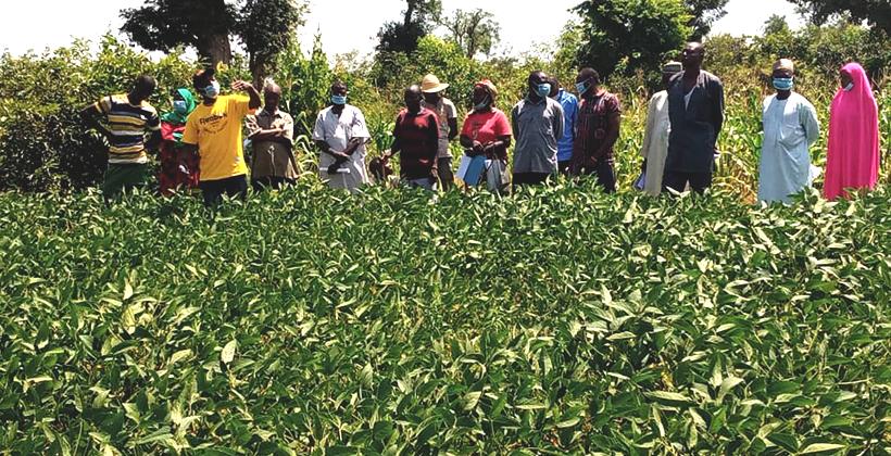 IITA conducts farmers' Green Field Day in Northeast Nigeria Brandspurng2