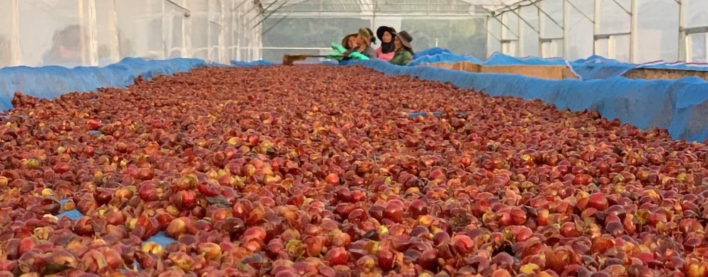 Olam Coffee develops novel superfruit products from upcycled coffee cherry cascara Brandspurng