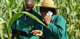 Agribusiness-made-easy-through-the-use-of-ICT-brandspurng-IITA Focuses On Integrated Digital Tools For Accelerating Agricultural Transformation In Sub-Saharan Africa