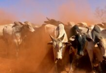 10 Ingredients Needed For Boosting The Radical Livestock Husbandry Program BRANDSPURNG