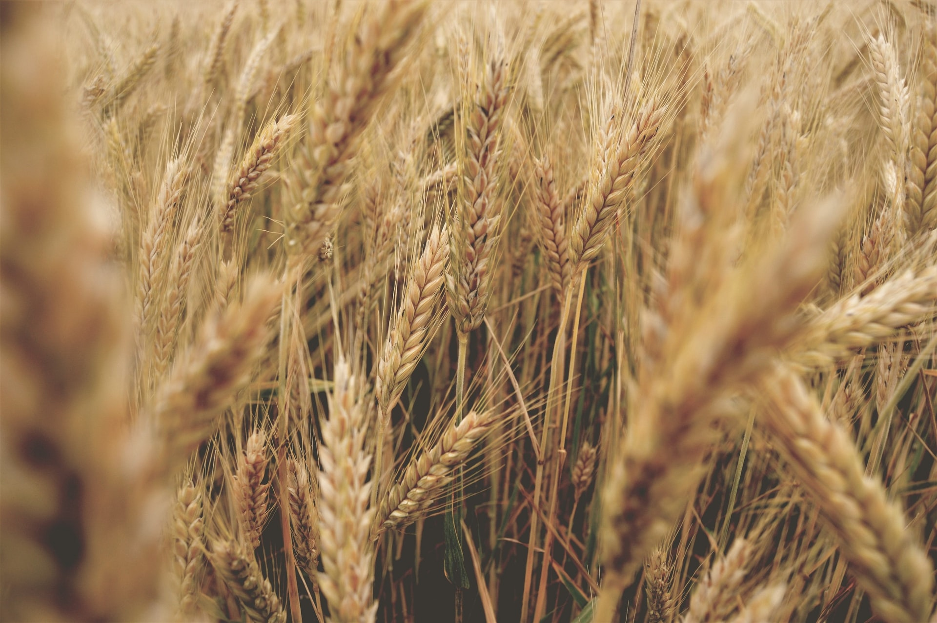 World cereal production forecast raised but stocks now foreseen to fall sharply and trade to exceed earlier predictions Brandspurng1