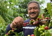 Nestlé Scientists Discover Unique Low Carbon And Drought Resistant Coffee Varieties-Brand Spur Nigeria